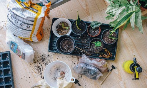 An Extensive Guide on Keeping Your Garden Plants Healthy and Radiant