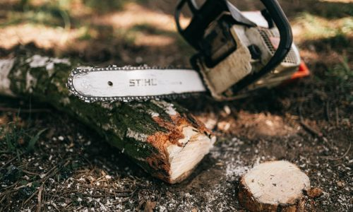 Discussing Reasons Why Employing Tree Specialists Should Be You Number One Choice